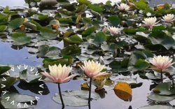 Orto Botanico e Giardino delle Biodiversità